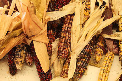 Autumn, Indian Corn, Corn, Indian, Fall, Harvest, Maize