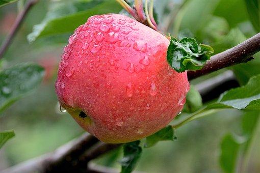 Apple, Dew, Healthy, Freshness, Juicy, Sweet, Fresh