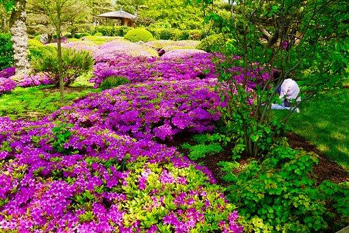 Botanic Garden, Japanese Garden, Landscape