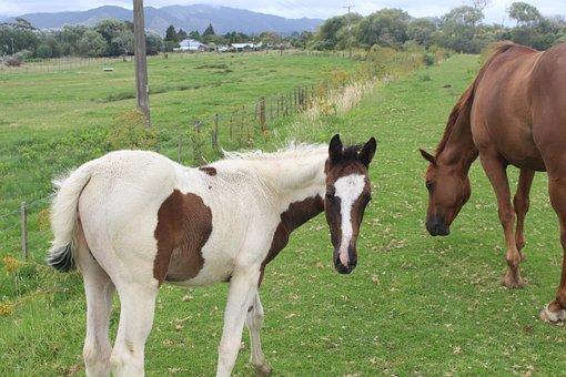 Foal, Horses, New Zealand, Opotiki, North Island, Green