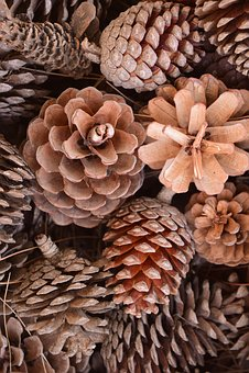Tap, Pine Cones, Nature, Pine, Ornament, Decoration