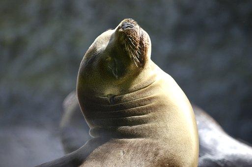 Robbe, Water, Sun, Baby Seal, Sea Lion, Sea, Posing
