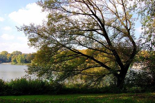 Lake, Tree, Autumn, Windschief, Meadow, Smaller Tree