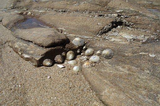 Mussels, Snails, Atlantic, Ebb, Nature, Animals, Coast