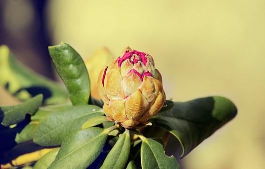 Spring, Bud, Garden, Flowers, Plant, Buds In Bloom