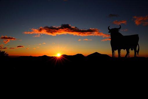 Bull, Spain, Sunset, Osborne, Holiday, Summer