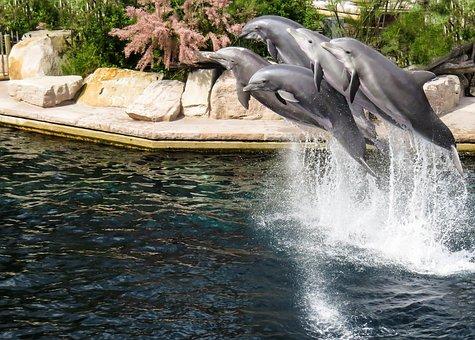 Dolphin, Pinball, Show, Nuremberg, Tiergarten, Jump