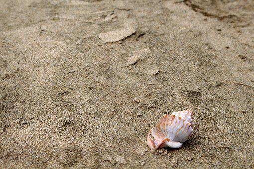Shell, Sand, Beach, Sea, Summer, Nature, Vacations