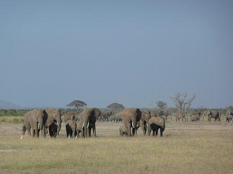 Elephants, Family, Wildlife, African, Kenya, Wild, Big
