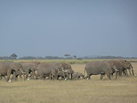 Elephants, Family, Savannah, Kenya, Wildlife, African