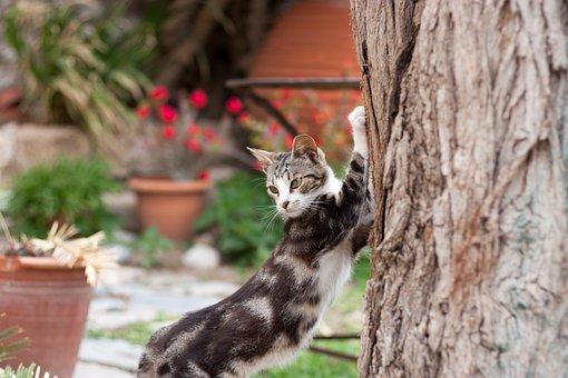 Cat, Pet, Bokeh, Animal, Domestic, Cute