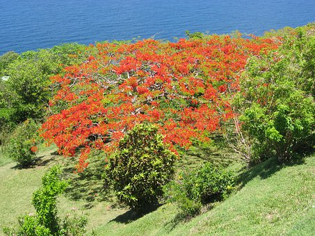 Tree, Caribbean, Flowers, Tropical, Coast, Exotic