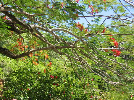 Tree, Flowers, Leaves, Tropical