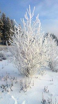 Spokane River, Winter, Tree, Frozen, White, Silhouette