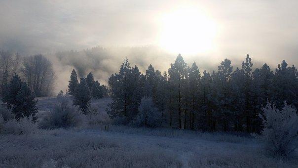 Spokane River, River, Winter, Tree, Frozen, White