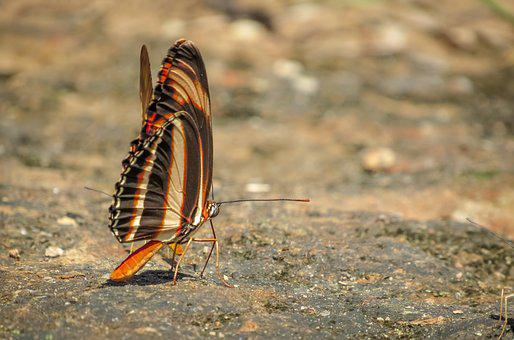 Insect, Butterfly, Colorful Butterfly, Brown, Orange