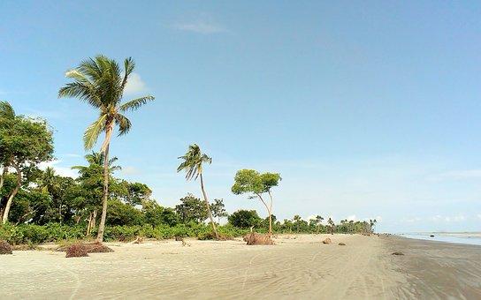 Kuakata, Beach, Palm Trees, Sea, Sand, Landscape