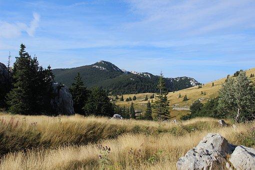 Hills, Mountain, Field, Golden Fields, Croatia, Meadow