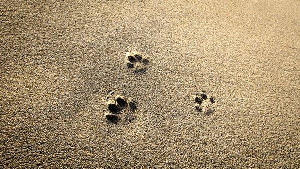 Cat Prints, Sand, Footprint, Beach, Mark