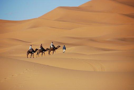 Desert, Sand, Dunes, Morocco, Dromedary, Camel