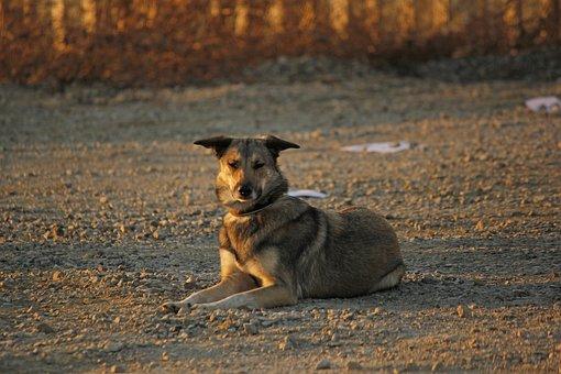 Hybrid, Evening Sun, Dog Training, File, Space, Dog