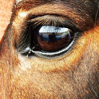 Horse, Eye, Horse Eye, Beautiful
