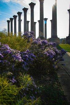 Park, Flowers, Lens Flare, National Arboretum, Foliage