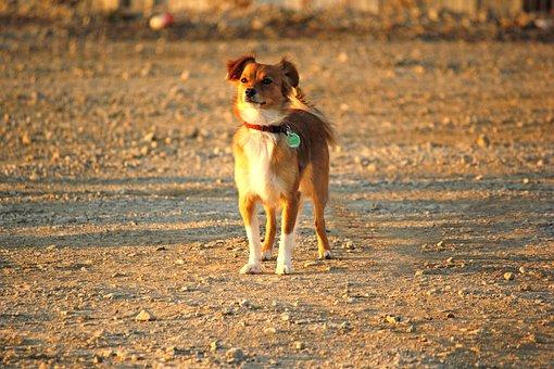 Hybrid, Dog, Standing, Dog Training, Dog School