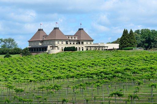 Vine Yard, Winery, Georgia, Usa, Vine, Wine, Grape