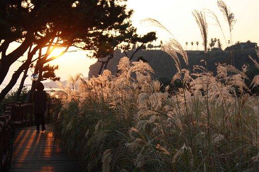 Coastal, Jeju Island, Night View, Sea, Sunset, Pathway