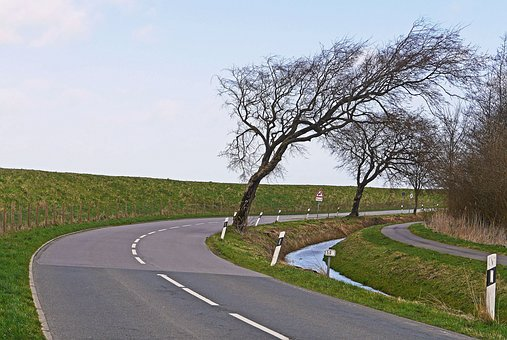 East Frisia, Dike, West Wind, Street Trees, Askew