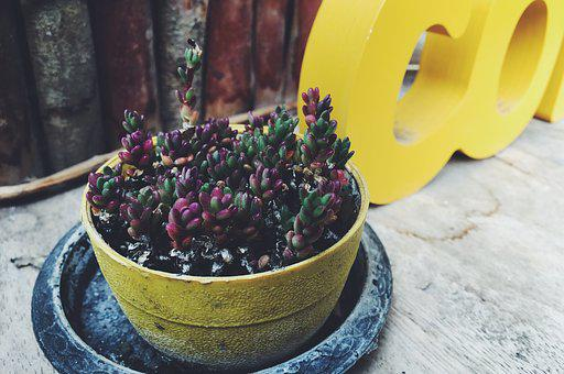 The Stone Roses, Flower Pot, Tree, Flowers