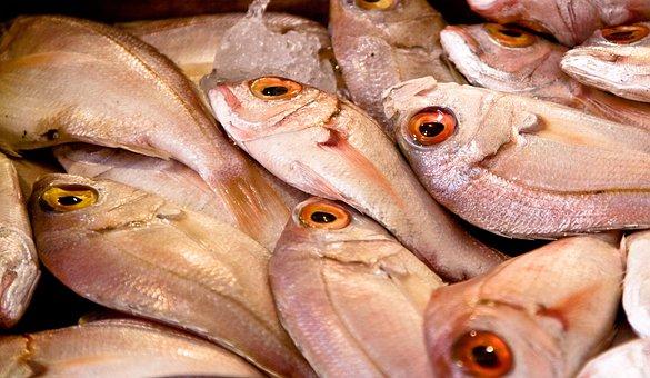 Fish, Market, Food, Seafood, Fresh, Raw, Mediterranean