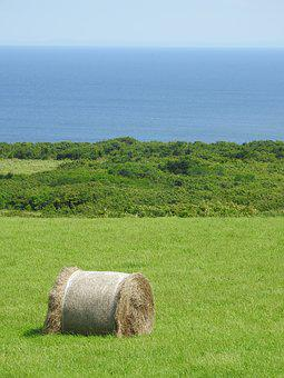 Sea, Grass, Hokkaido, Hay, Cordyceps Sinensis, Ranch