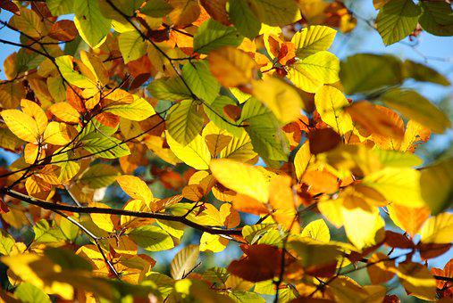 Autumn, Leaves, Light, Nature, Golden Autumn, Leaf