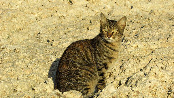 Cat, Stray, Beach, Animal, Cute, Outdoor, Homeless