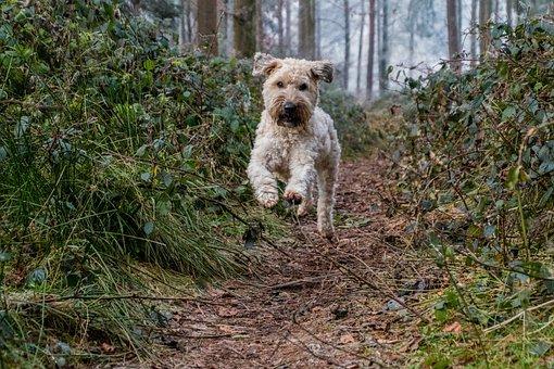 Dog, Jump, Play, Autumn, Leaves