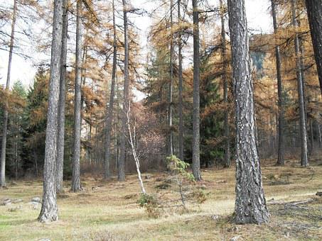 Wood, Forest, Fall, Tree, Natural, Outdoor, Plant