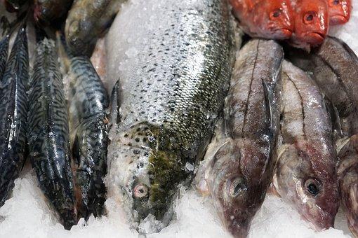 Fish, Eat, Market, Healthy, Omega, Fat, Skin, Sea