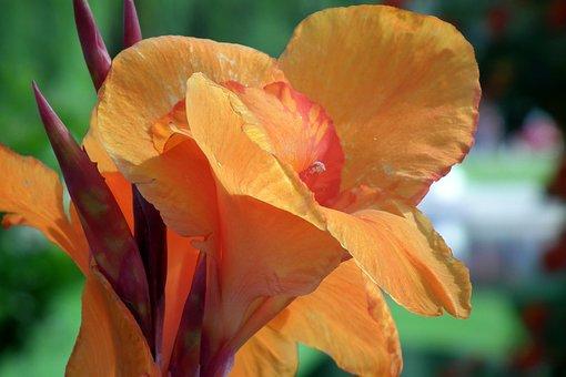 Lily, Flowers, Floriade, Orange, Garden, Nature