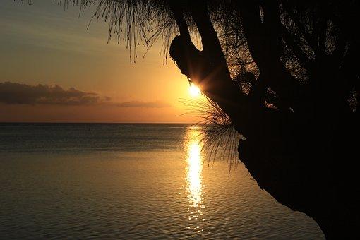 Sunset, Tropics, Island, Tree, Evening, Tmosphere