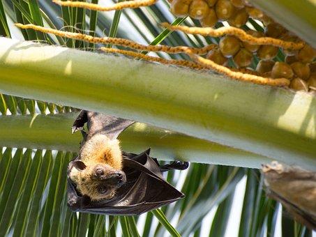 Bat, Animal, Palm, Sun, Day, Tropics, Maldives