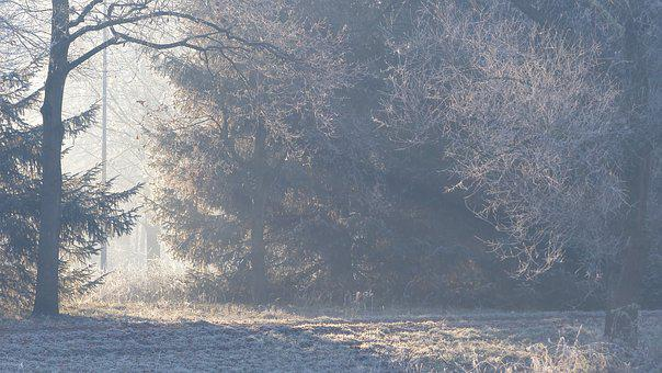 Forest, Frost, Fog, Early Morning, Autumn, Fall, Season
