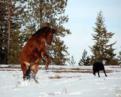 Horse Rearing, Equine, Strong