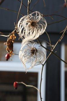Winter Day, Winter, Nature, Minus, Flowers, Flower