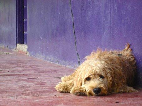Dog, Color, Puppy, Sad, Purple, Pet, Pup, Animal, Cute