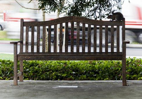Bench, Squirrel, Cupertino, Park, Wildlife