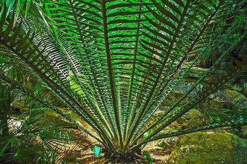 Palm, Prickly, Green