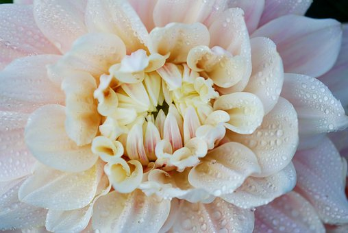 Flower, White, Macro, Floral, Blossom, Petal, Flora