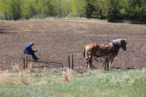 Farming, Field, Agriculture, Farm, Plow, Agricultural